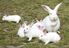 家兔的飼料種類與飼喂